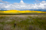Carrizo Plain Wildflowers Thumbnail